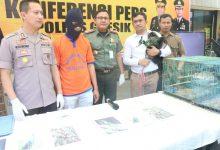 Photo of Berhasil Amankan 13 Ekor Satwa Langka Yang Akan Diperjualbelikan, Kapolres Gresik Gelar Konferensi Pers