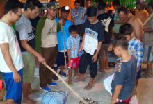 Photo of Warga Tanahlandean Menyatakan Perang Melawan Tikus