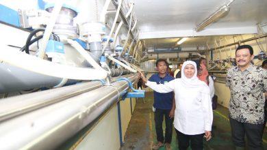 Photo of Kejar Target Jatim Swasembada Susu,  Gubernur Khofifah Dorong Perluasan Peternakan Sapi Perah