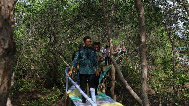 Photo of Wakil Bupati Gresik Dukung Pengembangan Kawasan Wisata Mangrove Di Bawean