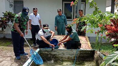Photo of Danlanal Batuporon Bersama Prajuritnya Budidayakan Lahan Tidur Guna Tingkatkan Ketahanan Pangan