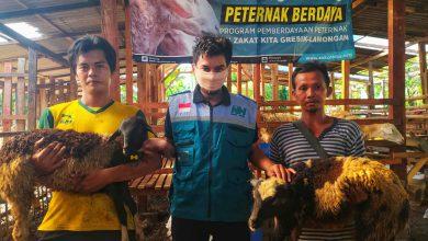 Photo of Wabah Covid -19 Tak Kunjung Berakhir, Warga Gresik Diajak Ternak Kambing