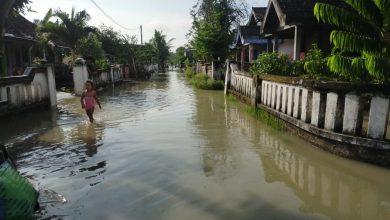 Photo of Banjir Desa Banjaragung Kali ini Menggenangi Rumah Di dua RT dan Puluhan Ha Sawah, tanaman Padi Dan Kangkung