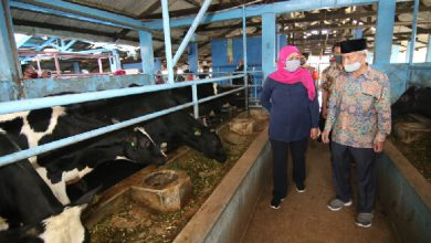 Photo of Mampu Survive Di Tengah Pandemi, Gubernur Khofifah Dorong Industri Persusuan Jatim Penuhi Kebutuhan Dalam Negeri
