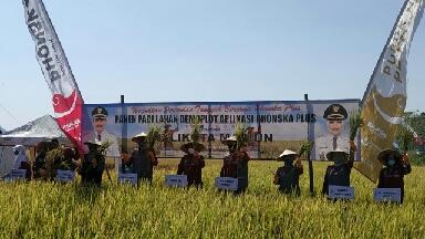 Photo of Panen raya padi menggunakan NPK Phonska Plus pada lahan demonstration plot (demplot) di Kota Madiun.