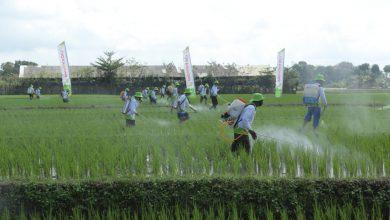 Photo of 365 Hari untuk Indonesia Kontribusi Petrokimia Gresik Untuk Pulihkan Ekonomi Nasional