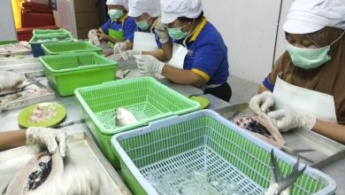 Photo of Bandeng Mentari Terus Berinovasi Untuk Bertahan di Tengah Pandemi, Mitra Binaan SIG