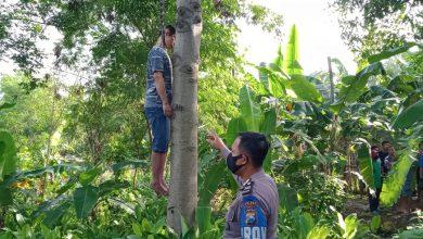 Photo of Pria Paruhbaya Ditemukan Tewas Gantung Diri Di Pohon Kedondong