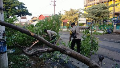 Photo of Polisi Membawa Sebilah Parang di Tepi Jalan, Ternyata Menebang Pohon Tumbang