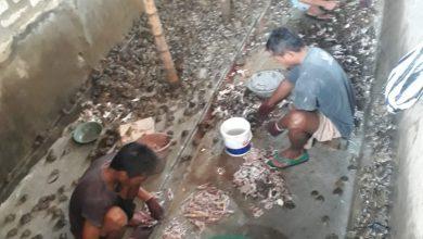 Photo of Kran Ekspor Belum Di Buka Pedagang Kodok Di Kabupaten Sampang Menjerit