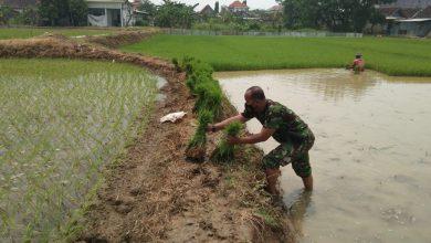Photo of Babinsa Cagak Agung, Serma Suyatno Berikan  Pendampingan Kepada petani  Binaannya