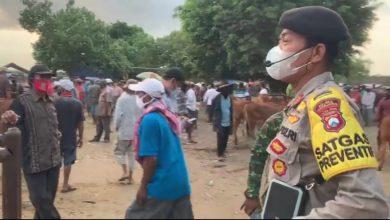 Photo of Ramai Pengunjung, Pasar Hewan Lumajang Disidak Petugas Gabungan Tiga Pilar