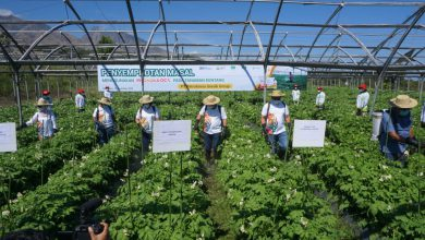 Photo of Hadirkan Solusi Untuk Petani, Petrokimia Gresik Luncurkan  Tiga produk Baru