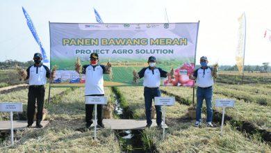Photo of Petani Bawang di Nganjuk Tersenyum, Produktivitas Bawang Merah Meningkat, Berkat Program Agro Solution Petrokimia Gresik