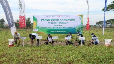 Photo of Berkat Program Tani Makmur Petani Kangkung Wonorejo Hasilnya Meningkat Hingga 12 %