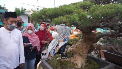 Photo of 414 Penghobi Ikuti Kontes dan Pameran Bonsai di Desa Petung